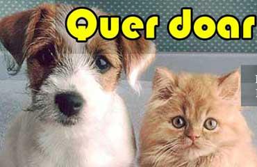 QUER DOAR um Pet (cão ou gato) ?