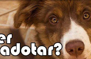 QUER ADOTAR um Pet (cão/gato) ?